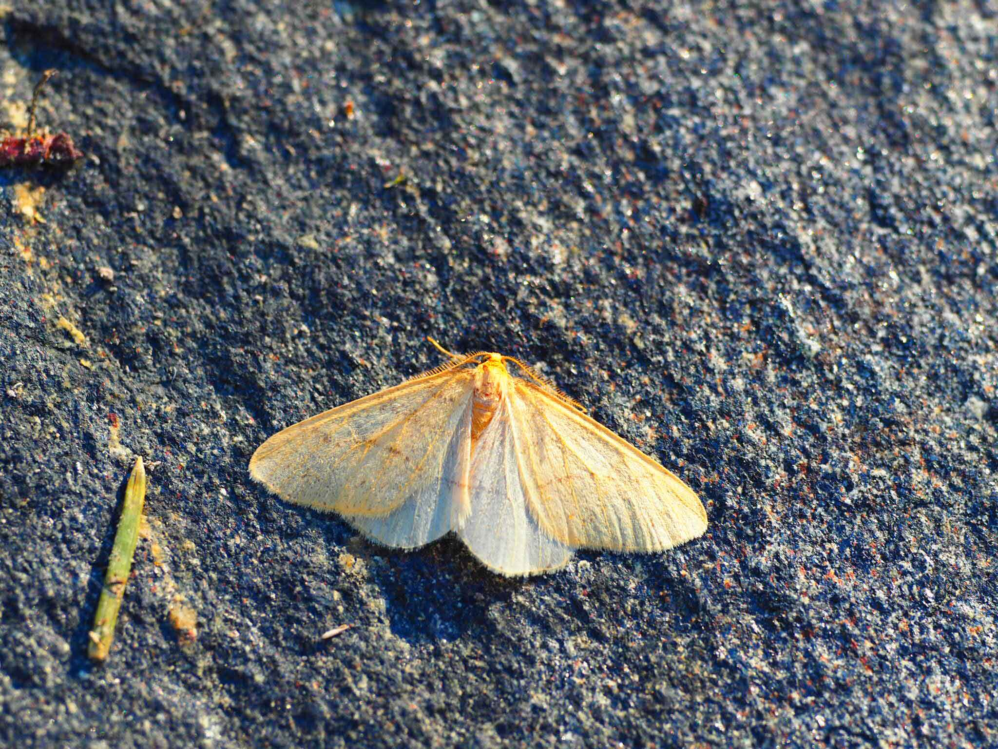 Photo: Jon Aars
