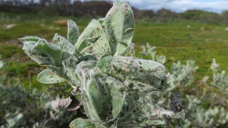 Photo: Ole Petter Vindstad